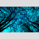 Frank Titze, Ulm/Germany - No. 1138 : Trees I - Blue - 959x640 Pixel - 1345 kB