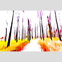 Frank Titze, Ulm/Germany - No. 1191 : Trees I - Aquarelle - 959x640 Pixel - 615 kB
