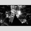 Frank Titze, Ulm/Germany - No. 1192 : Trees I - Father - 947x640 Pixel - 415 kB