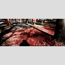 Frank Titze, Ulm/Germany - No. 1195 : Trees I - Blood Red - 960x408 Pixel - 753 kB