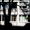 Frank Titze, Ulm/Germany - No. 1201 : Trees I - Shadow - 640x640 Pixel - 331 kB