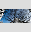 Frank Titze, Ulm/Germany - No. 1209 : Trees I - Black and Blue - 960x413 Pixel - 681 kB