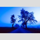 Frank Titze, Ulm/Germany - No. 121 : Trees I - Blue Light - 960x639 Pixel - 211 kB