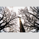 Frank Titze, Ulm/Germany - No. 1224 : Trees I - Steel Tree - 959x640 Pixel - 970 kB