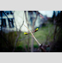 Frank Titze, Ulm/Germany - No. 127 : Film 3:2 I - Spring - 959x640 Pixel - 121 kB