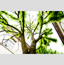 Frank Titze, Ulm/Germany - No. 1281 : Trees I - Light Green - 959x640 Pixel - 915 kB
