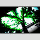 Frank Titze, Ulm/Germany - No. 1282 : Trees I - Dark Green - 947x640 Pixel - 601 kB