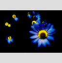 Frank Titze, Ulm/Germany - No. 1287 : Y 2013-08 - Flower Variation I - 947x640 Pixel - 292 kB