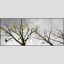 Frank Titze, Ulm/Germany - No. 1315 : Trees I - Three Trees - 960x413 Pixel - 357 kB