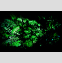 Frank Titze, Ulm/Germany - No. 1376 : Y 2013-09 - Green II - 959x640 Pixel - 697 kB
