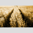 Frank Titze, Ulm/Germany - No. 1460 : Y 2013-10 - Corn Cross - 959x640 Pixel - 1093 kB
