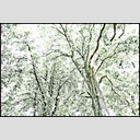 Frank Titze, Ulm/Germany - No. 1468 : Trees I - Mono - 953x640 Pixel - 860 kB