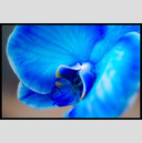 Frank Titze, Ulm/Germany - No. 163 : Y 2012-05 - Colored Orchid - 947x640 Pixel - 143 kB