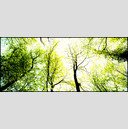 Frank Titze, Ulm/Germany - No. 164 : Y 2012-06 - Green Trees - 960x413 Pixel - 513 kB