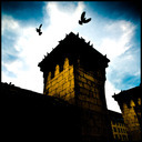 Frank Titze, Ulm/Germany - No. 188 : Fortress of Ulm - Birds - 640x640 Pixel - 124 kB