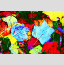 Frank Titze, Ulm/Germany - No. 1917 : Film 3:2 III - Colored Autumn - 959x640 Pixel - 1281 kB