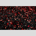 Frank Titze, Ulm/Germany - No. 1920 : Trees I - Blood Red - 959x640 Pixel - 924 kB