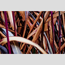 Frank Titze, Ulm/Germany - No. 1928 : Film 3:2 III - Grass II - 959x640 Pixel - 626 kB