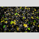 Frank Titze, Ulm/Germany - No. 1984 : Trees I - Green Yellow No Red - 959x640 Pixel - 744 kB