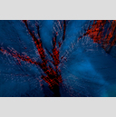 Frank Titze, Ulm/Germany - No. 2012 : Trees I - Dancing Lights I - 959x640 Pixel - 832 kB