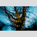 Frank Titze, Ulm/Germany - No. 2024 : Trees I - Dancing Lights XIII - 959x640 Pixel - 946 kB