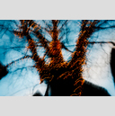 Frank Titze, Ulm/Germany - No. 2025 : Trees I - Dancing Lights XIV - 959x640 Pixel - 851 kB