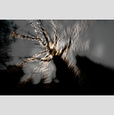 Frank Titze, Ulm/Germany - No. 2033 : Trees I - Dancing Lights XXII - 959x640 Pixel - 469 kB