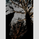 Frank Titze, Ulm/Germany - No. 2040 : Trees I - Dancing Lights XXIX - 457x640 Pixel - 294 kB