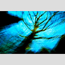 Frank Titze, Ulm/Germany - No. 2041 : Trees I - Dancing Lights XXX - 959x640 Pixel - 917 kB