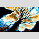 Frank Titze, Ulm/Germany - No. 2042 : Trees I - Dancing Lights XXXI - 959x640 Pixel - 1036 kB
