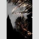 Frank Titze, Ulm/Germany - No. 2046 : Trees I - Dancing Lights XXXV - 427x640 Pixel - 279 kB