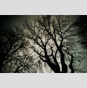 Frank Titze, Ulm/Germany - No. 2113 : Trees I - Winter Tree - 959x640 Pixel - 835 kB