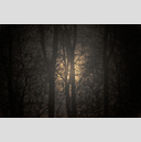 Frank Titze, Ulm/Germany - No. 2114 : Trees I - Sun Between Trees - 959x640 Pixel - 477 kB