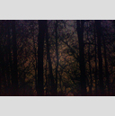 Frank Titze, Ulm/Germany - No. 2115 : Trees I - Last Light Between Trees - 959x640 Pixel - 739 kB