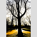 Frank Titze, Ulm/Germany - No. 2282 : Trees I - In the Shadow - 427x640 Pixel - 438 kB