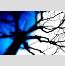 Frank Titze, Ulm/Germany - No. 2293 : Trees I - The Witch II - 959x640 Pixel - 446 kB