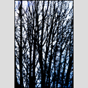 Frank Titze, Ulm/Germany - No. 2328 : Trees I - Structures II - 430x640 Pixel - 517 kB