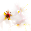 Frank Titze, Ulm/Germany - No. 2346 : Y 2014-08 - Flower - 640x640 Pixel - 137 kB