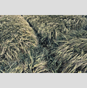 Frank Titze, Ulm/Germany - No. 2370 : Y 2014-08 - Corn Cross - 959x640 Pixel - 1171 kB