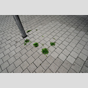 Frank Titze, Ulm/Germany - No. 2595 : Y 2014-11 - Green against Grey I - 959x640 Pixel - 702 kB
