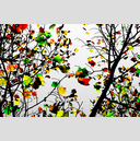 Frank Titze, Ulm/Germany - No. 2670 : Y 2015-01 - Colored Leaves - 959x640 Pixel - 804 kB