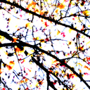 Frank Titze, Ulm/Germany - No. 2671 : Y 2015-01 - Hazy Leaves - 640x640 Pixel - 620 kB