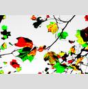 Frank Titze, Ulm/Germany - No. 2672 : Y 2015-01 - Last Leaves - 959x640 Pixel - 489 kB