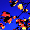 Frank Titze, Ulm/Germany - No. 2673 : Y 2015-01 - Burning Leaves - 640x640 Pixel - 460 kB