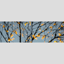 Frank Titze, Ulm/Germany - No. 2693 : Non Common II - Leaves - 960x318 Pixel - 247 kB