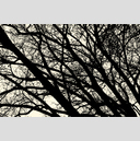 Frank Titze, Ulm/Germany - No. 2698 : Y 2015-01 - Falling Winter Trees - 959x640 Pixel - 764 kB