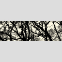 Frank Titze, Ulm/Germany - No. 2699 : Y 2015-01 - Winter Trees I - 960x318 Pixel - 413 kB