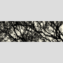 Frank Titze, Ulm/Germany - No. 2700 : Non Common II - Winter Trees II - 960x318 Pixel - 447 kB