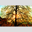 Frank Titze, Ulm/Germany - No. 2713 : Y 2015-01 - Tree Color - 959x640 Pixel - 1384 kB