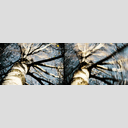 Frank Titze, Ulm/Germany - No. 2743 : Non Common II - Birch - 960x318 Pixel - 395 kB